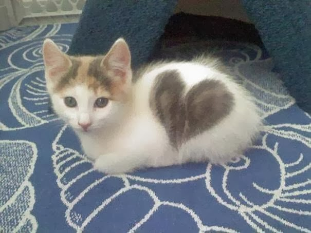 5 Pets wit strange and amazing markings on their