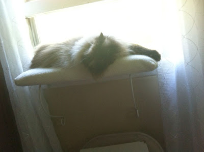 window-perch 01