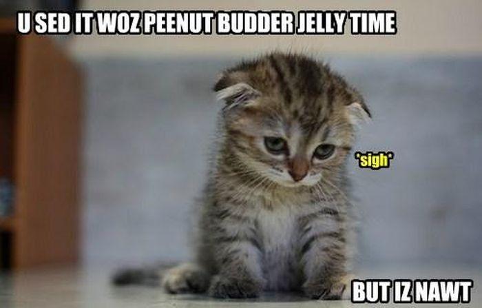 cat_memes_16.jpg