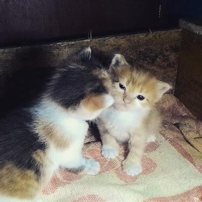 gambar-anak-kucing-lucu _ 03