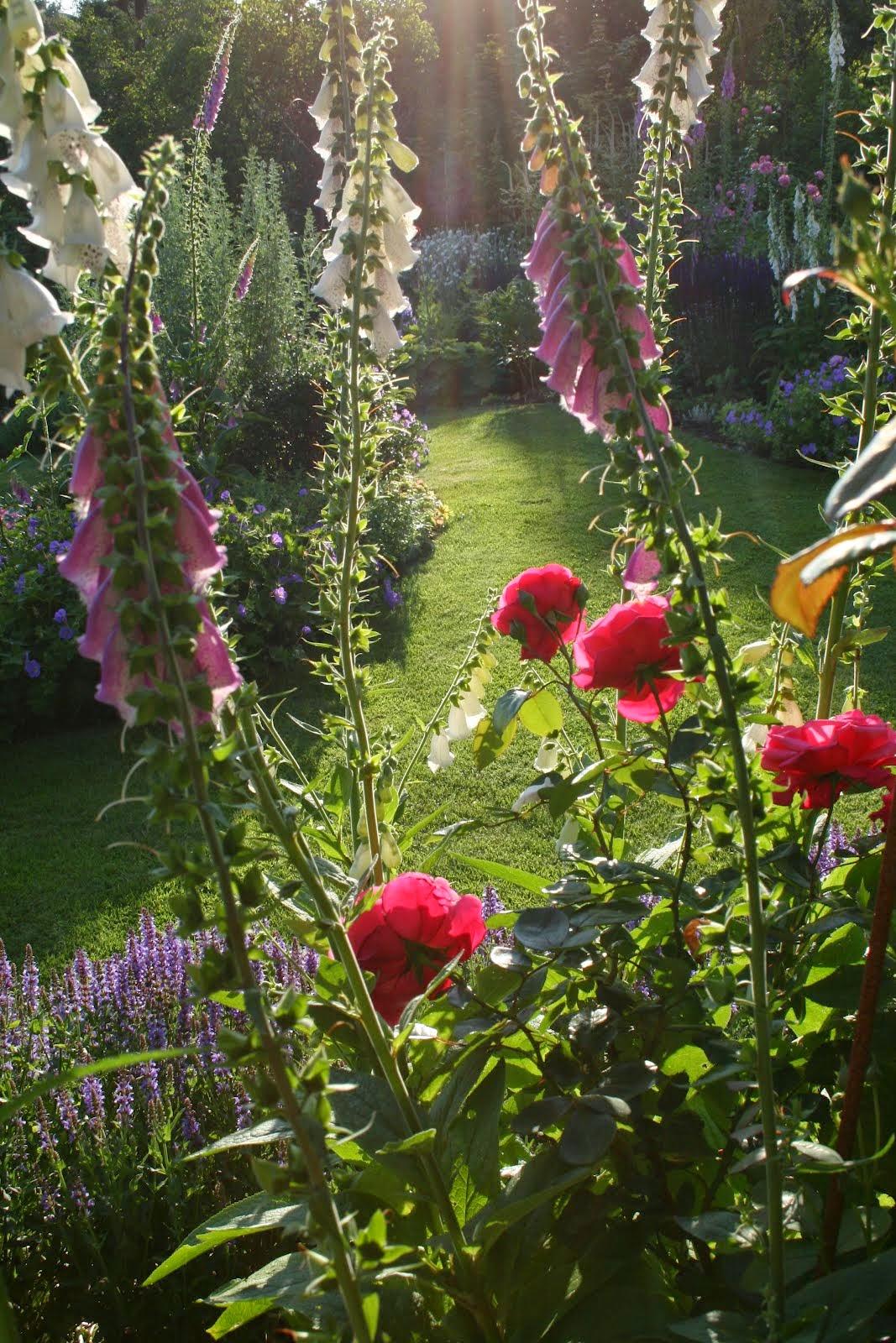 trädgårdsblogg rosenträdgård