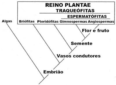 Evolução das estruturas vegetativas e reprodutivas das plantas