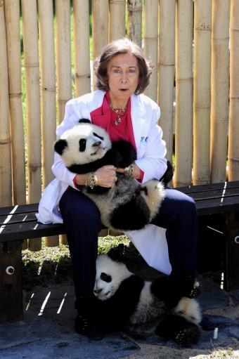 Reina Sofia  panda