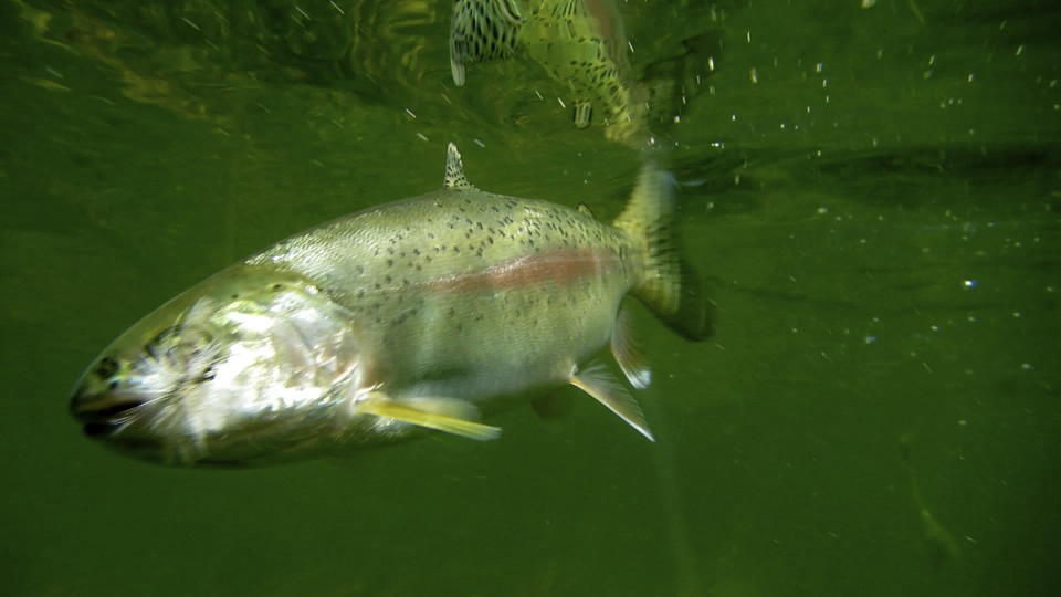 Idaho nature notes fishing report from silver creek for Silver creek fishing report
