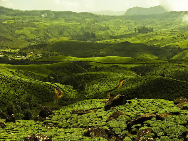 Tea Estates of Munnar, Kerala