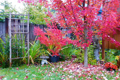 Back Yard, Natural Garden, Eugene, Oregon, Fall