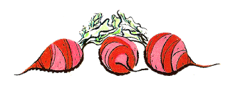 stock beets illustration