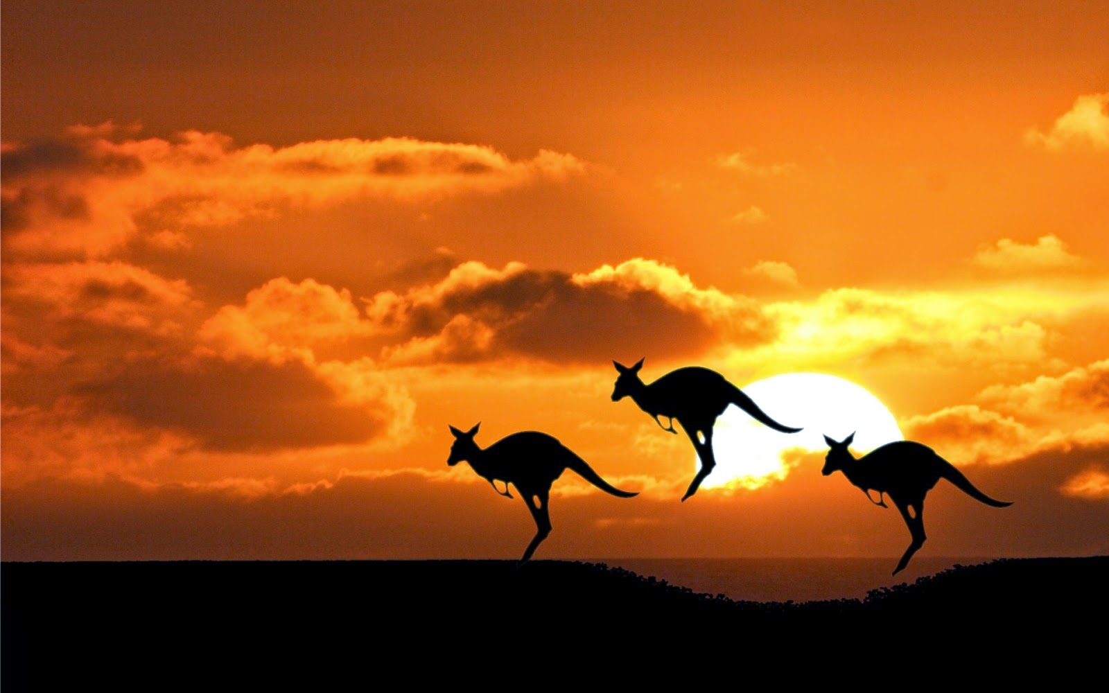 Top 5 dream destinations, world wide, Must visit places, Travel, Mexico, Beautiful places, Australia, Kangaroo