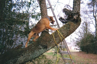 hunting dog on a tree