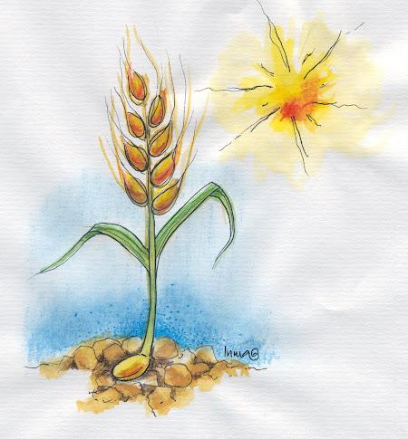 El grano de trigo