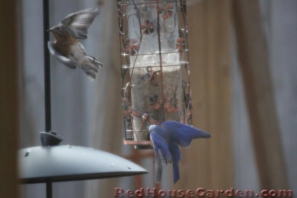 Red House Garden Birds Vs Aliens