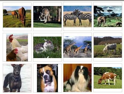 ANIMALES DOMÉSTICOS: ANIMALES DOMÉSTICOS