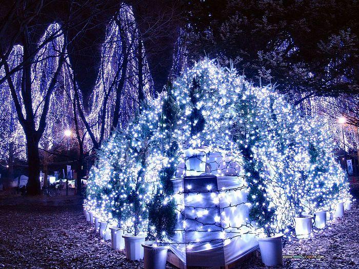 View cool christmas tree lights daily news