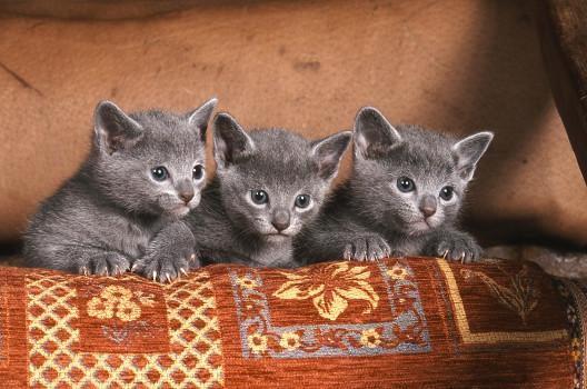 Imiona kotów