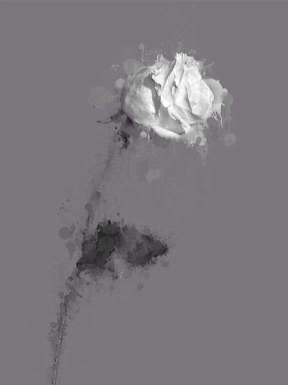 The White Rose © Alex Visage