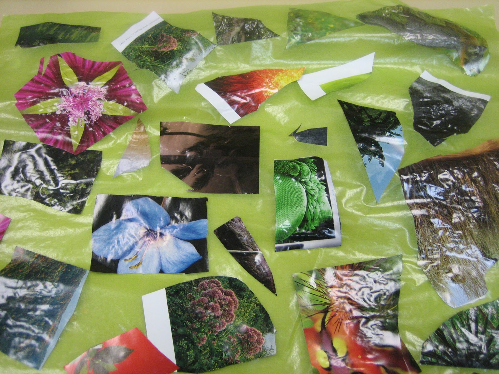 Lower school science 8th age environmental collages things made
