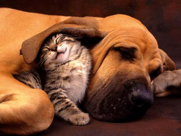 Funny+Dogs+%2526+Cats+Unconditional+Love