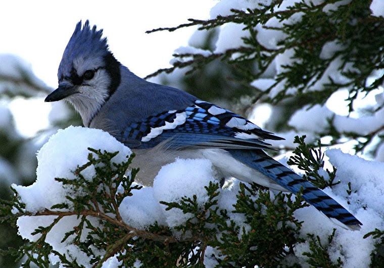 Ningea..pe ram de gand mi te-asezai...