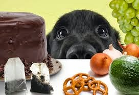 Poisonous Foods for Dogs