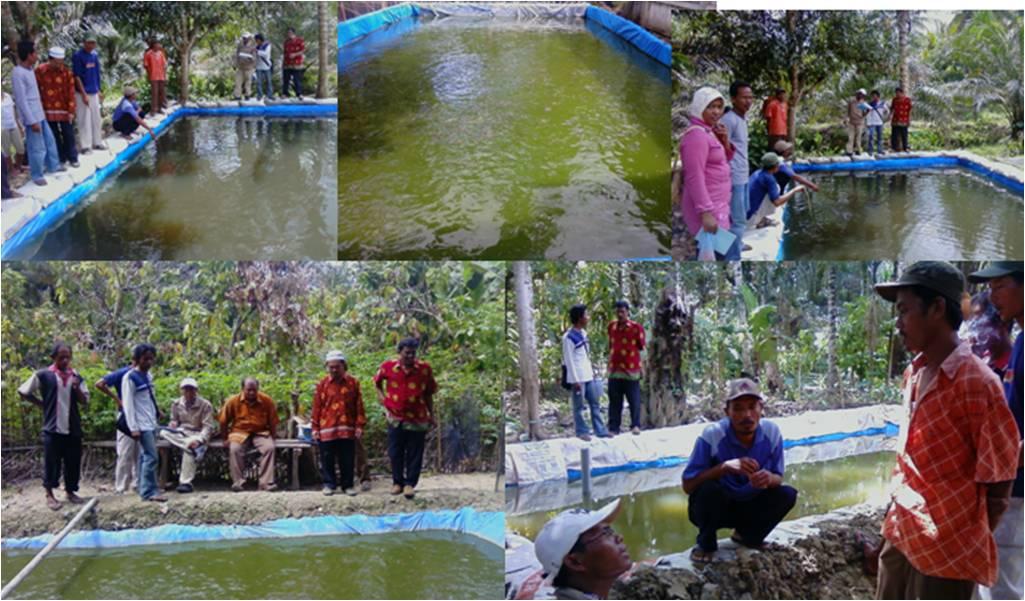 ... mukomuko dalam pembinaan dan pengembangan ikan lele di kolam terpal