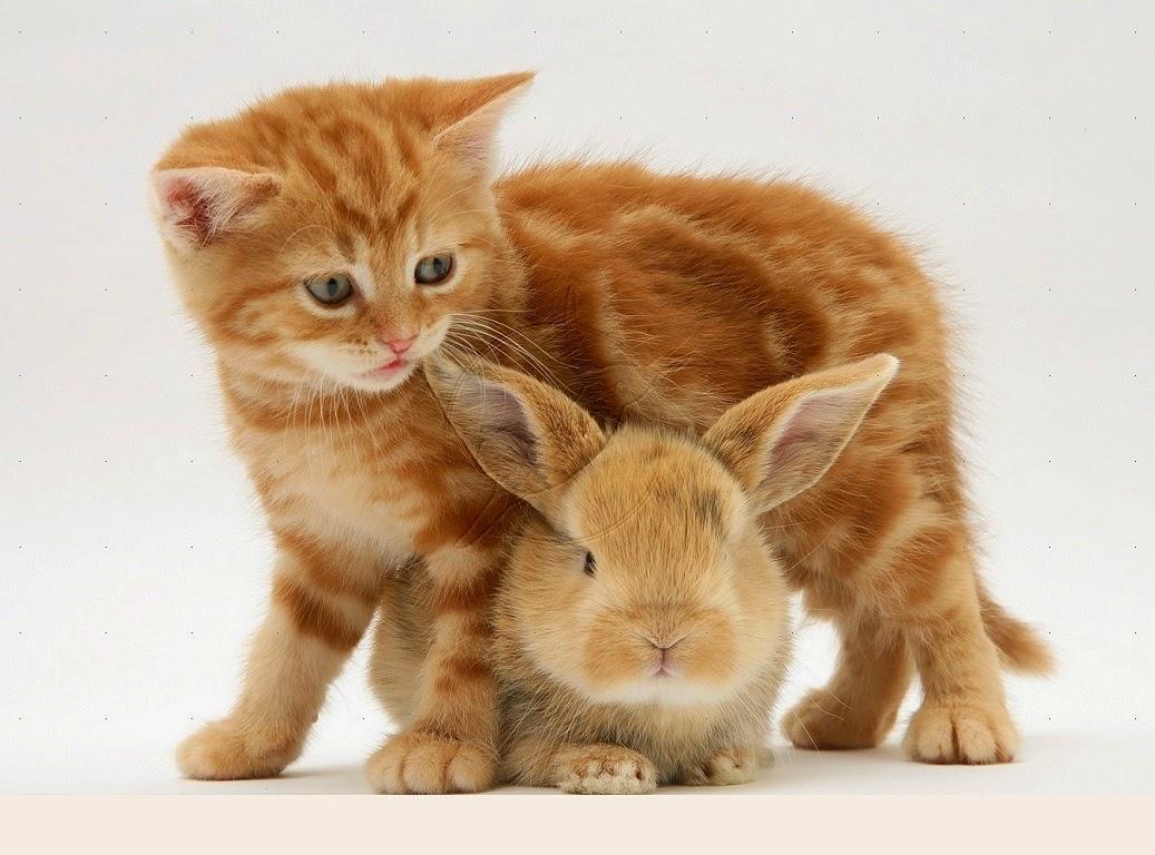 Gatito de jengibre y bebé conejo leonado