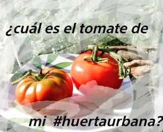 Tomates, raf y de rama
