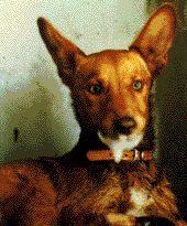 Rabia-perros