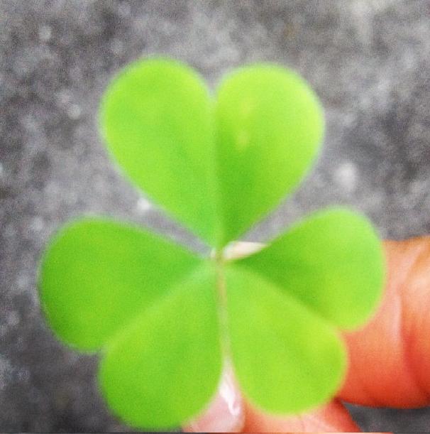 Spring, St. Patrick's Day