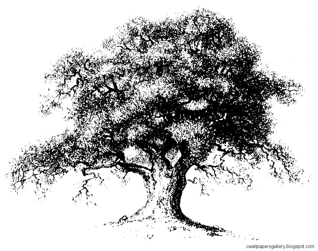 Tattoo on Pinterest  Oak Tree Oak Tree Drawings and The Celts