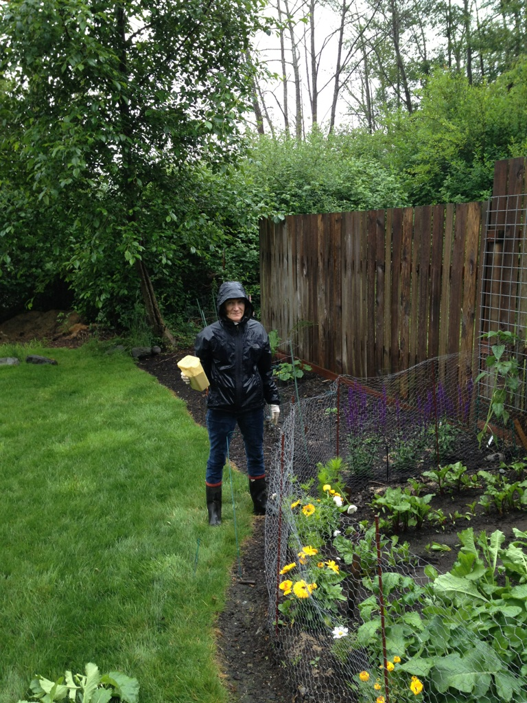 Diatomaceous earth in the garden - Black Tomatoes And Diatomaceous Earth