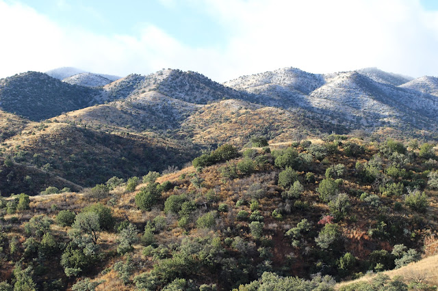 Coues%2BDeer%2BHunting%2Bin%2BSonora%2BMexico%2Bwith%2BColburn%2Band%2BScott%2BOutfitters%2BWhitetail%2BCountry%2B1.JPG