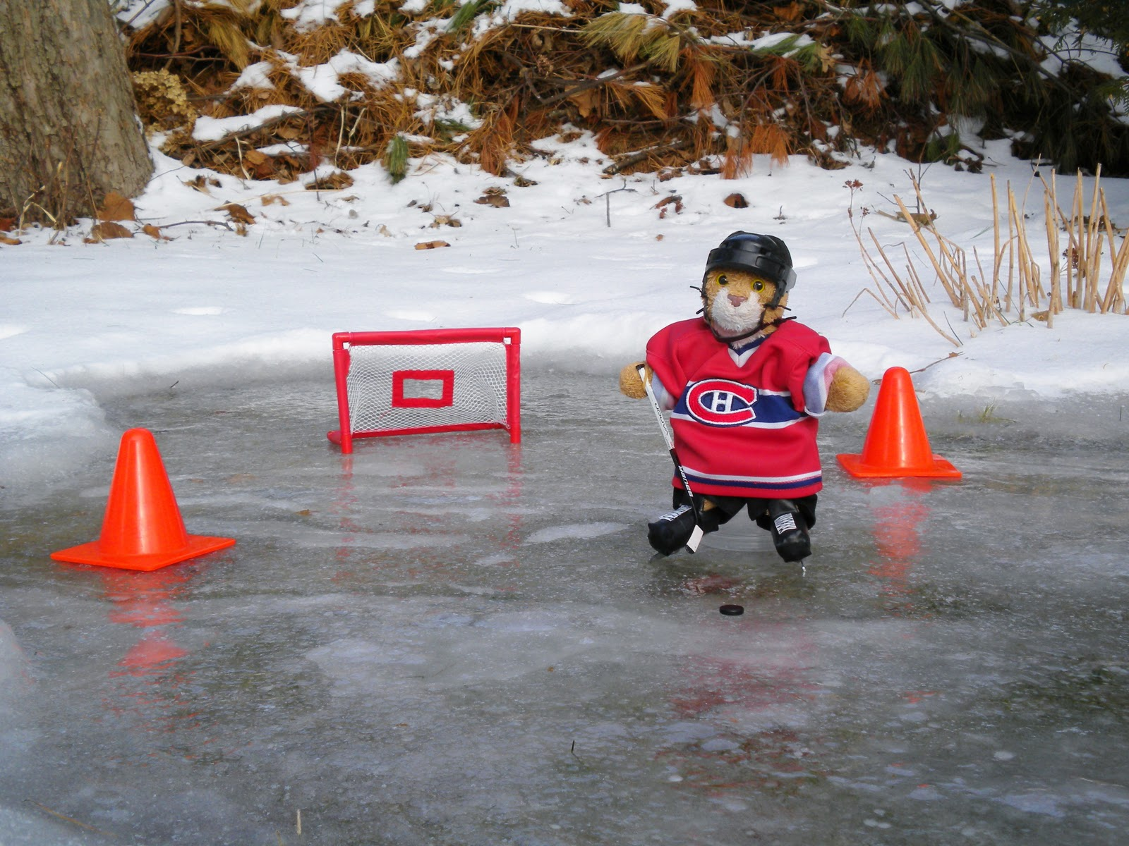 backyard hockey images reverse search