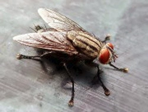 SEE MORE FLIES