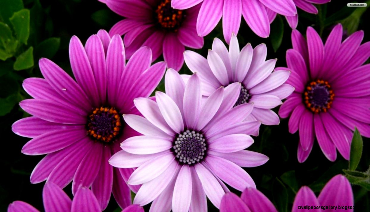 YouWall   Beautiful Flowers Wallpaper   wallpaperwallpapersfree