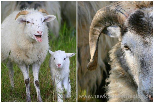 Schafe an Ostern