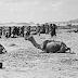 ملحوظات عن البدو والوهابيين..الجــــــــــراد