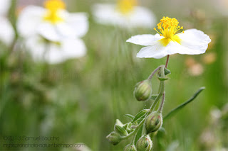 macro-fleur-bokeh-coloré-jaune-blanc-sauvage-