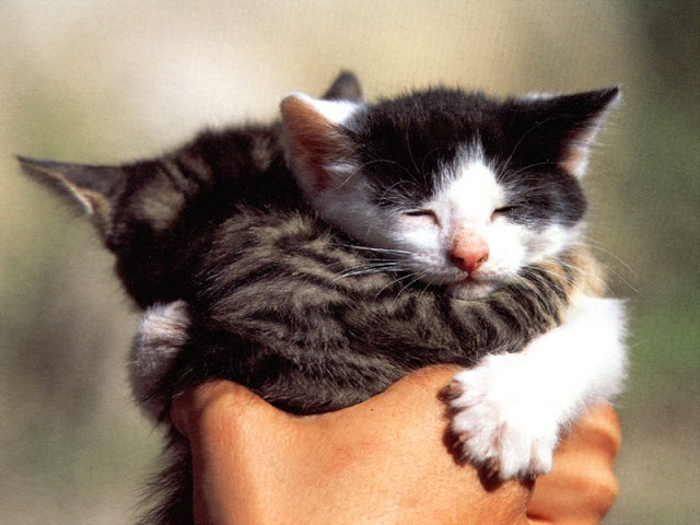 funny cat pictures, two kittens hugging