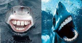Sharks smiling with human teeth