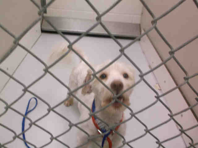 Date  Tue  Jun          at       AM Subject  Temple Texas Maltese Mix neutered very little adoption or rescue traffic lizardmarsh