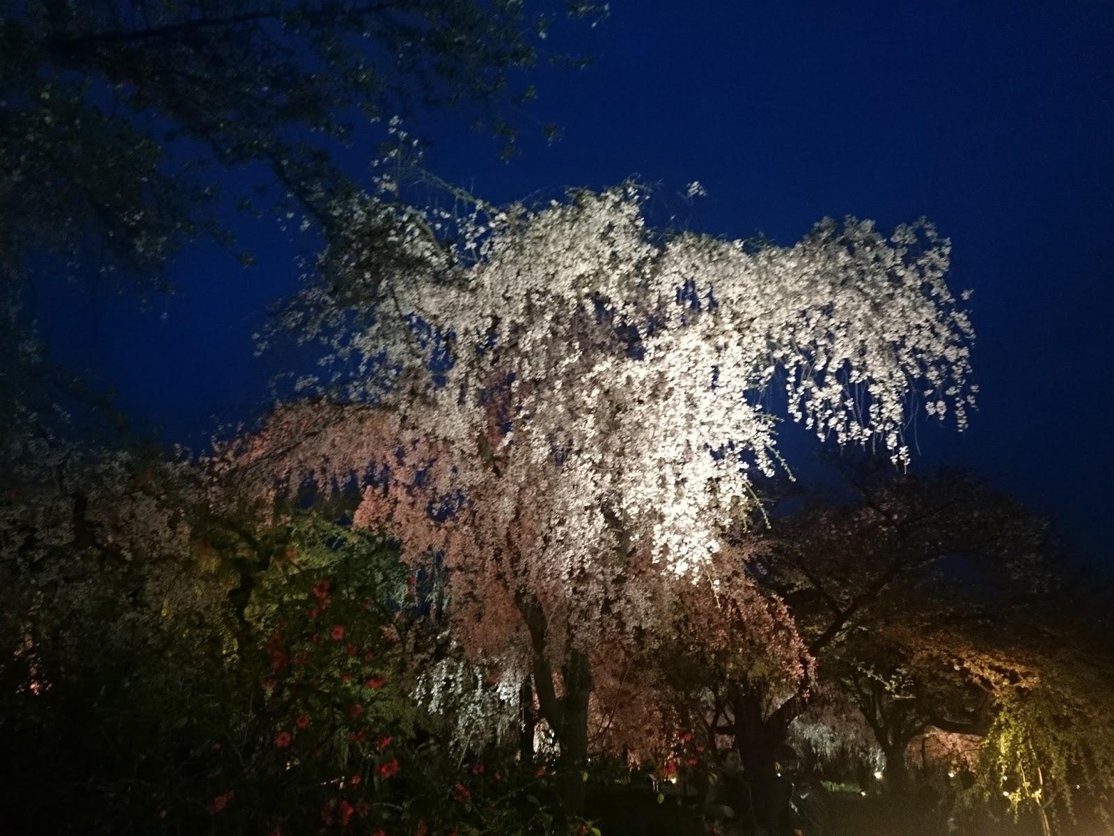京都 9 時 5 時