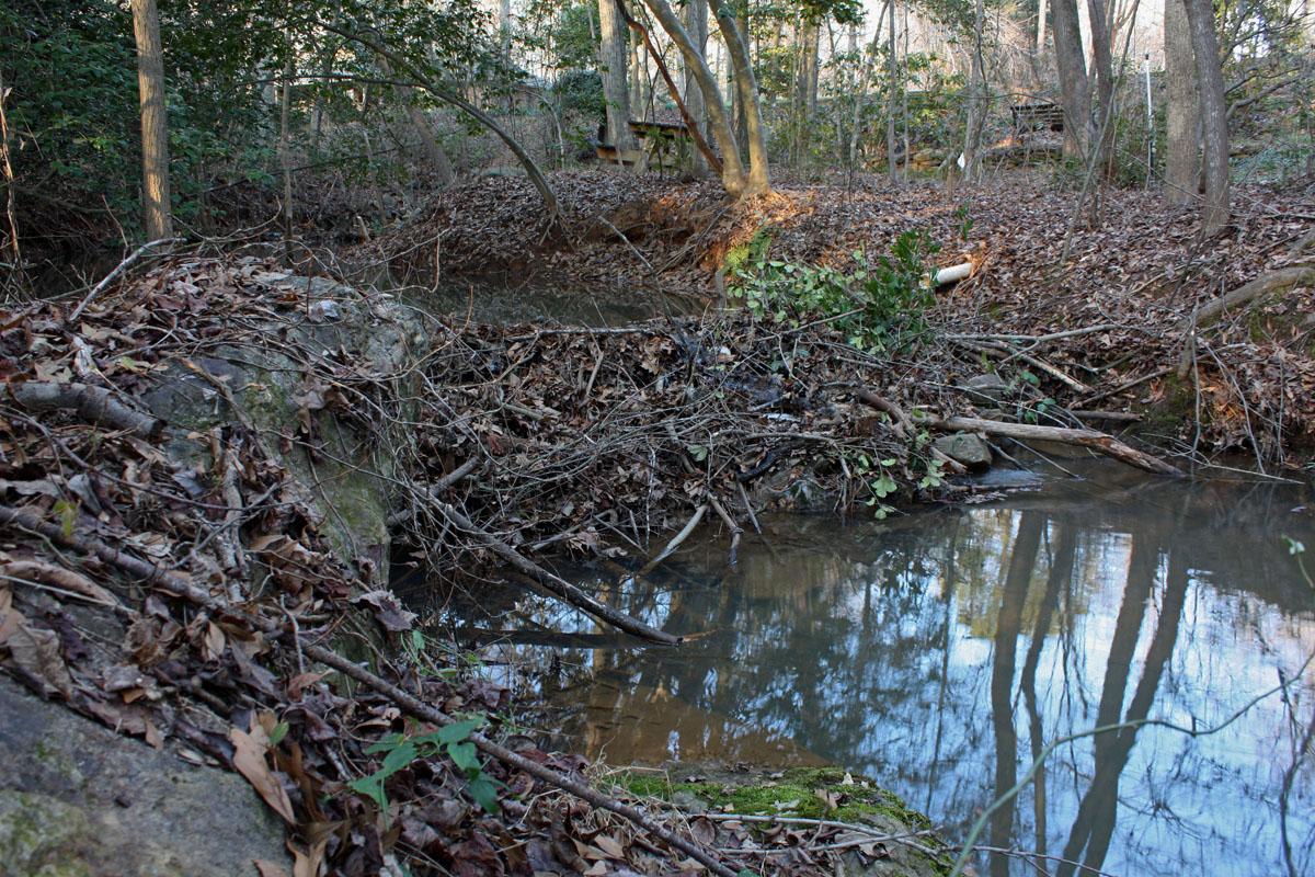 Inside a beavers dam - photo#17