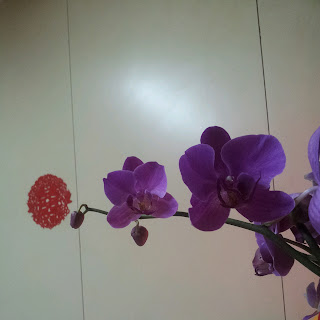 "Orchids with ""double happiness"""