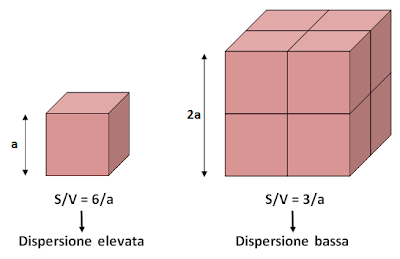 fattore di forma coefficiente rapporto S/V