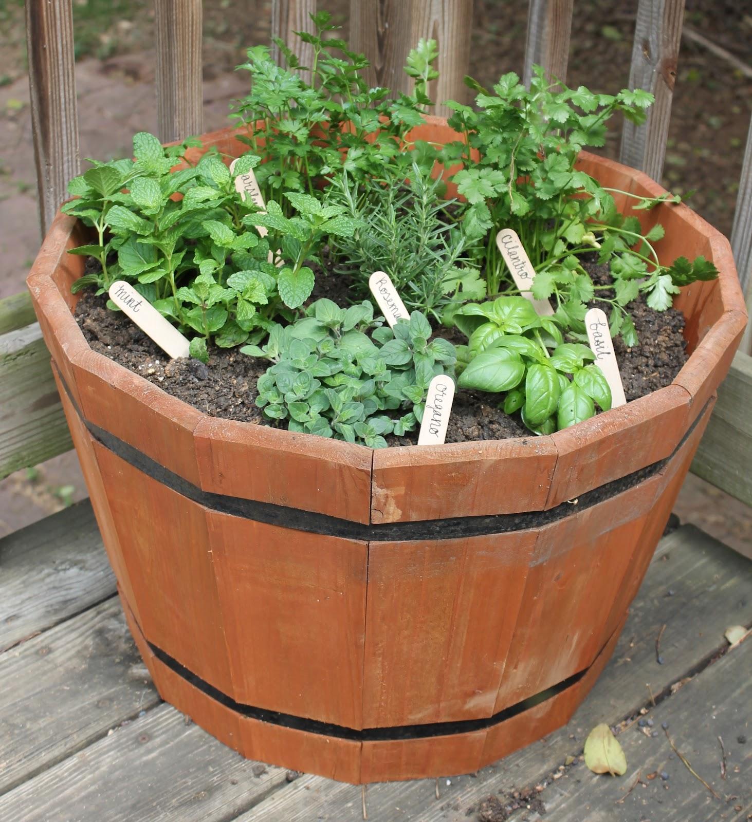 Carolina Charm Diy Herb Garden