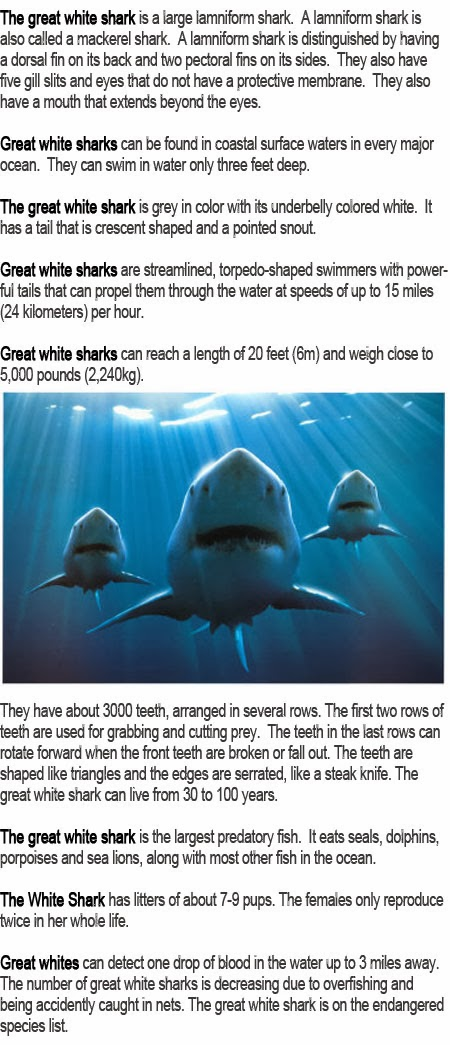 Great white shark information for kids