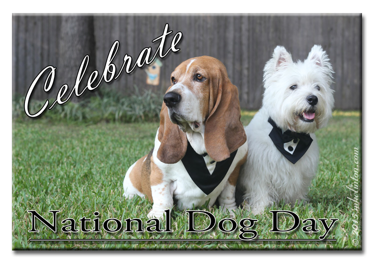 Basset & Westie celebrate National Dog Day in tuxedos