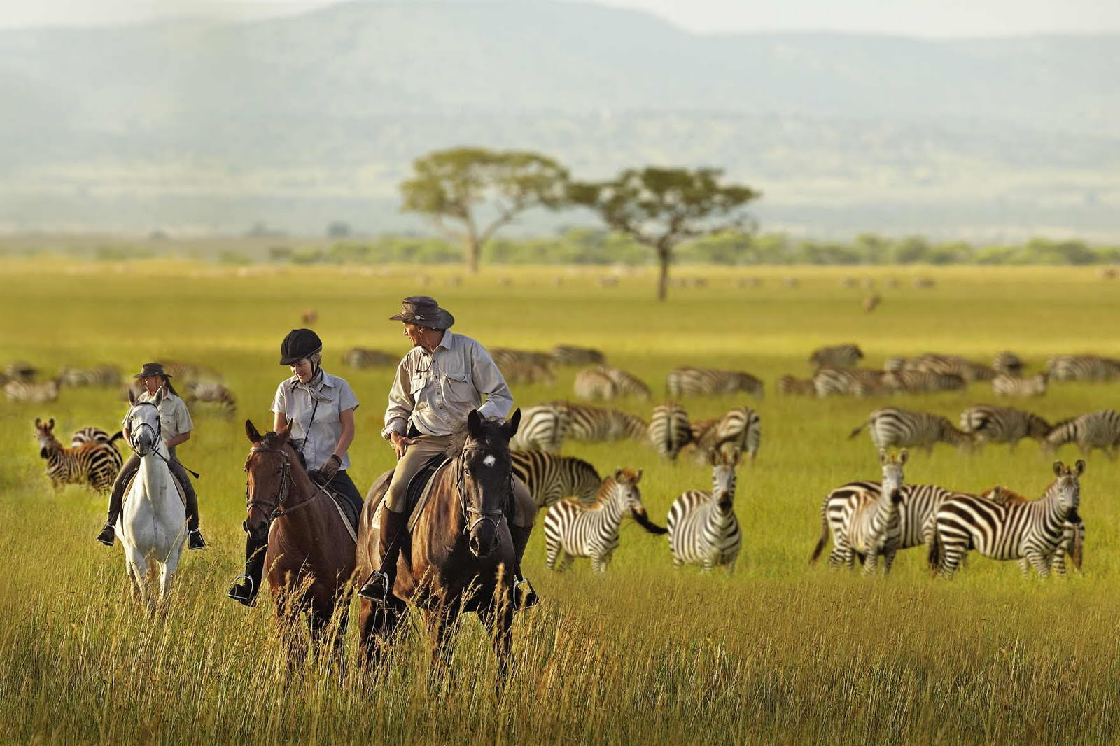Give Incandescent Sun Migrating Animals In The Serengeti Park