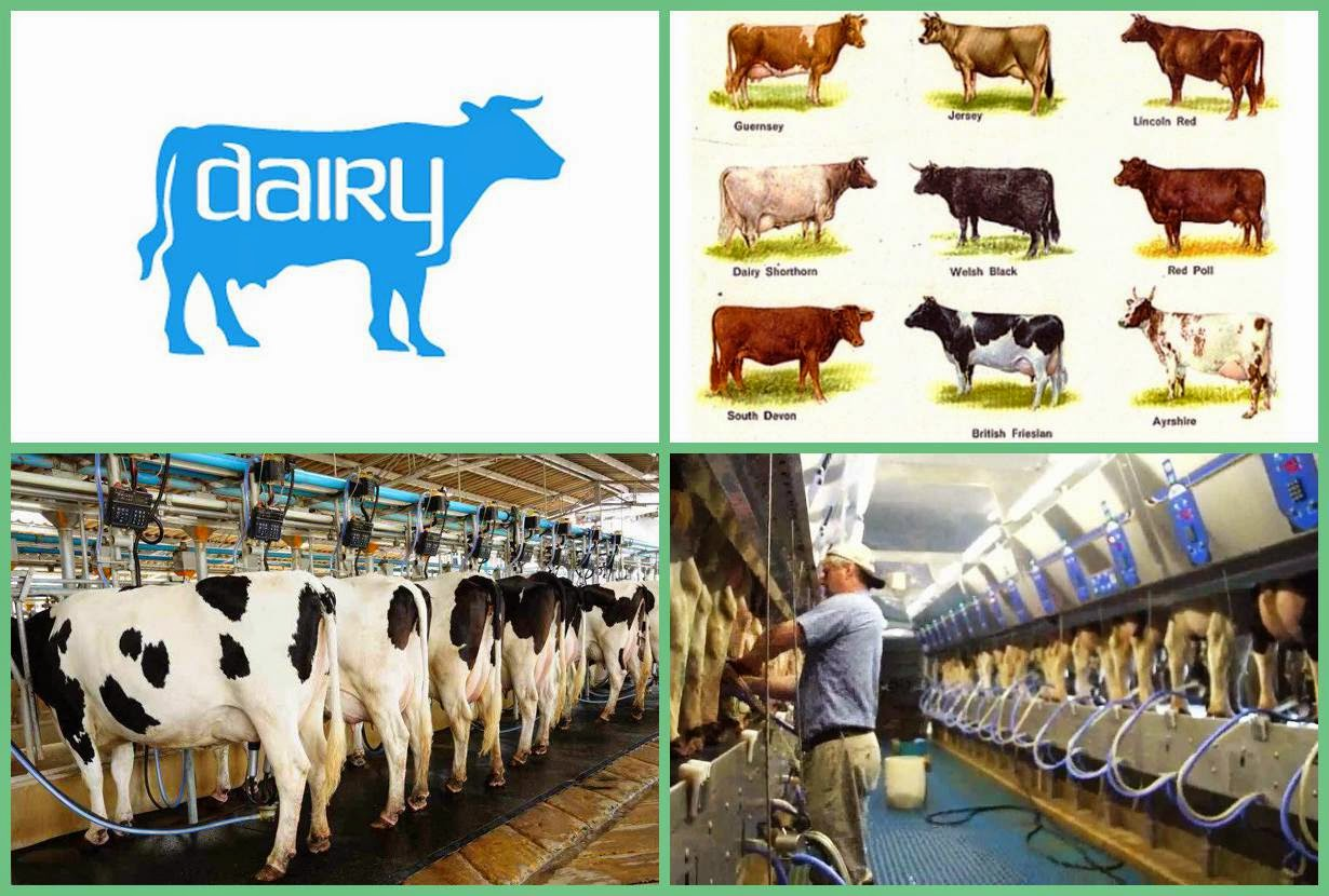 Dairy Farming | Business Ideas