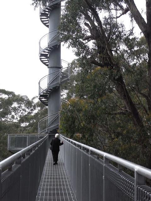 Knights tower, Illarrawa Fly Treetop Walk